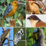 Birders Camping Special